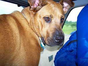 Scooby Backseat