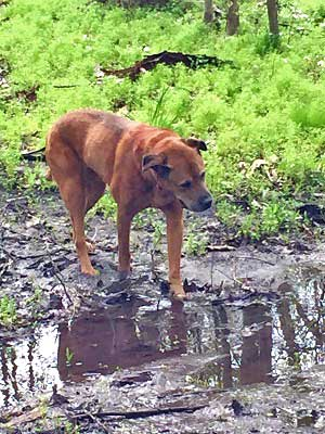 Scooby Mud