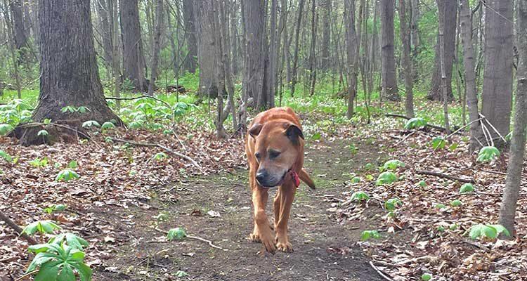 Scooby Walking