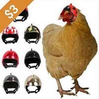 Chicken Helmets